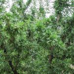 5ª-Marta-árbol