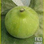 Fico_Panino_56176bd681a78